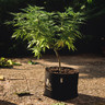 RQS Növénytartó Cseréptáska