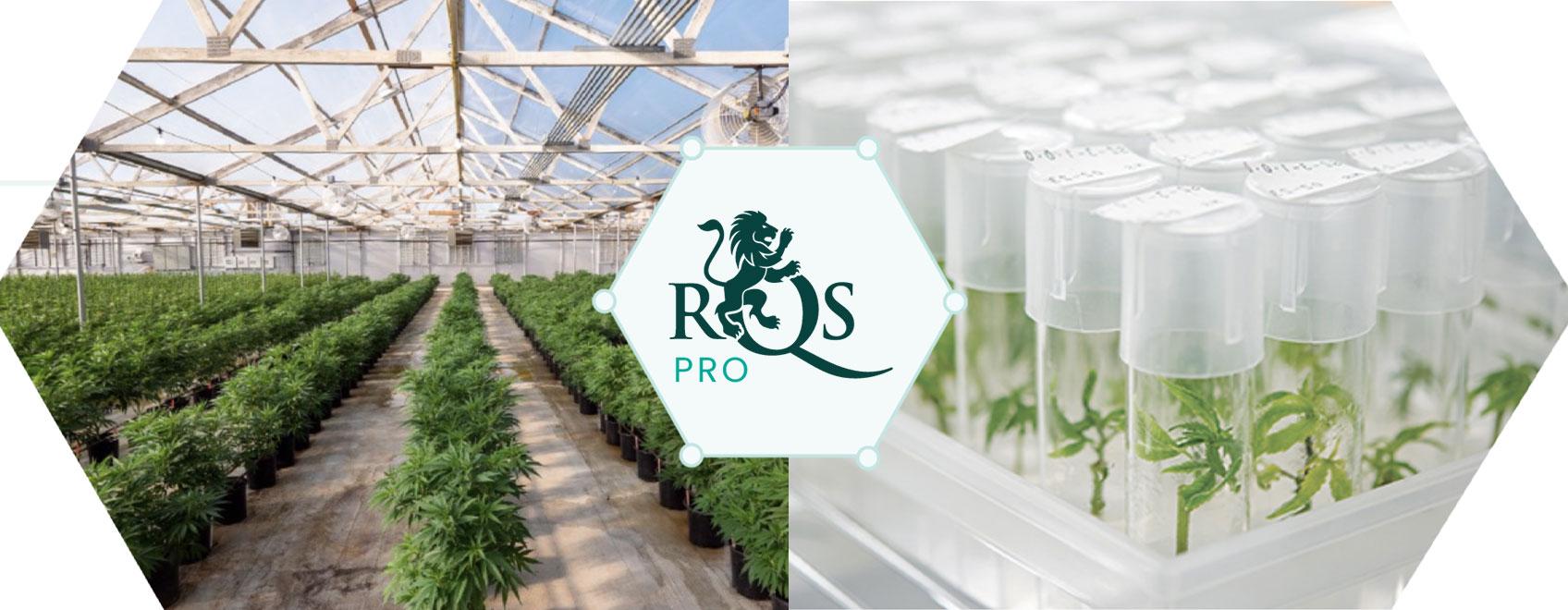 RQS Pro: Vezető kannabisz innováció és fejlesztés