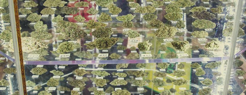 RQS Kannabisz Kupagyőztesek