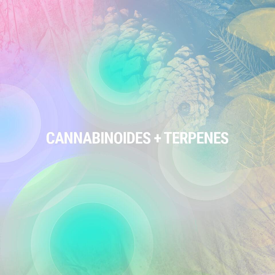 A Cannabis Összetevőinek Megértése