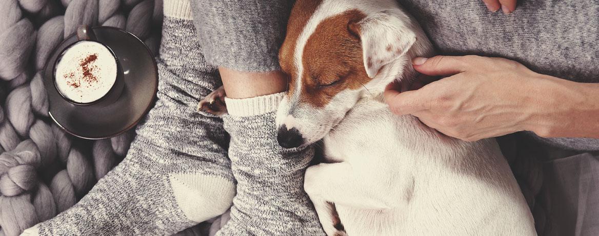 Mit kell tennie, ha a kutyája kannabiszt fogyasztott?