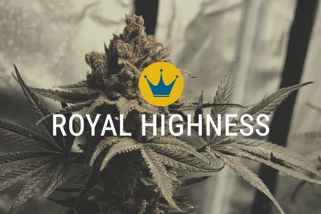 Royal Highness Medicals Marijuana Seeds