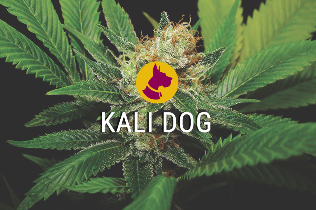 Kali Dog a Royal Chem Dawg