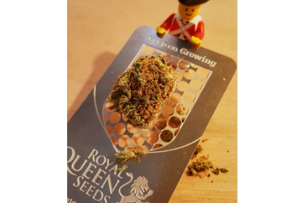 Cannabis Card Grinder with RQS Logo
